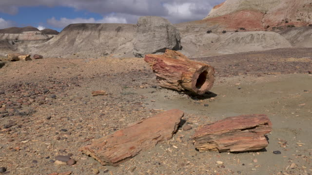 Petrified wood in Sarmiento, medium shot
