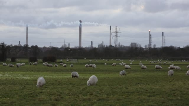 petrochemical works on deeside with sheep in the foreground at helsby, cheshire, uk. - image focus technique stock videos & royalty-free footage