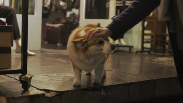 petting a cute corgi dog in front of a shop, taipei, taiwan - stroking stock videos & royalty-free footage