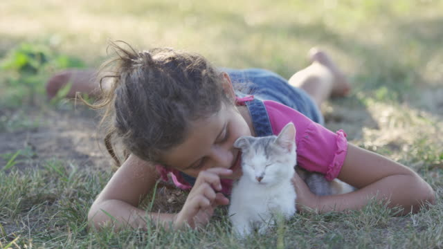 petting a new kitten - pet owner stock videos & royalty-free footage