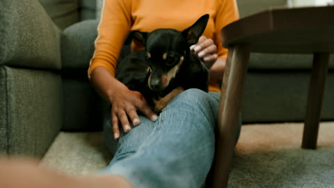 petting dog - stroking stock videos & royalty-free footage