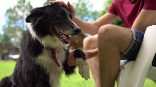 petting his dog friend - sheepdog stock videos & royalty-free footage