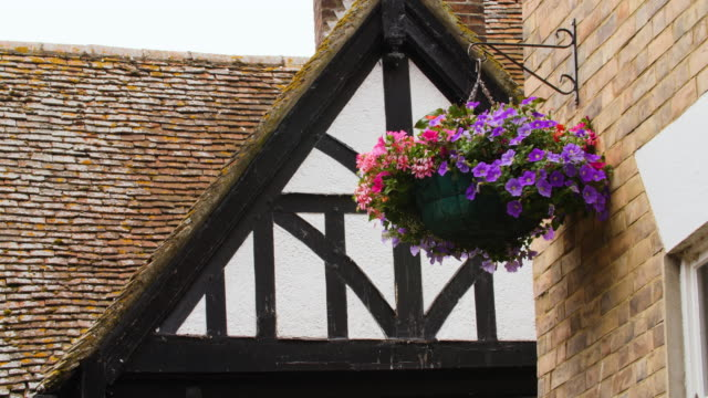 Petunias droop from a hanging basket in front of a Tudor building, Canterbury, Kent, UK.