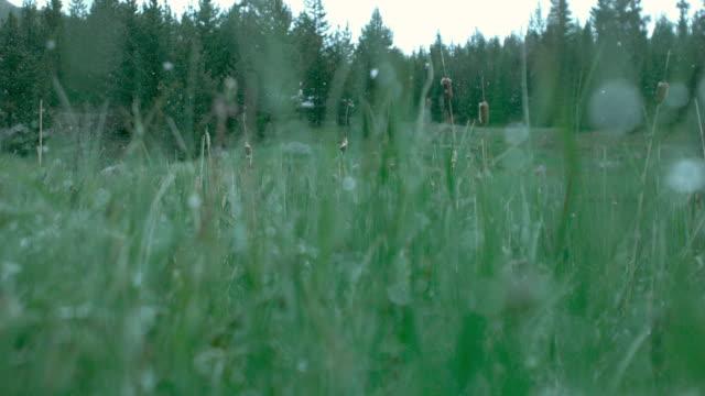 vídeos y material grabado en eventos de stock de phantom snow_03 - helio
