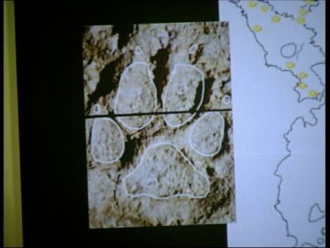 philippe fosse interview sot most of them were inaccessible/ were counting the bones seq finger pointing to photographs of footprint of young boy and... - prehistoric art stock videos & royalty-free footage