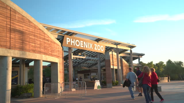 phoenix zoo - zoo stock videos & royalty-free footage