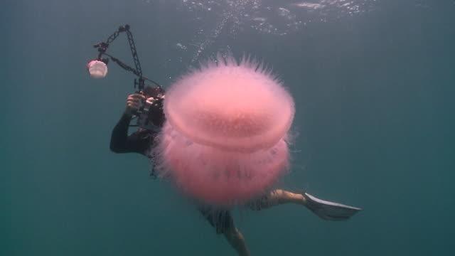 ms photographer taking photos of jellyfish / kota kinabalu, sabah, malaysia  - qualle stock-videos und b-roll-filmmaterial