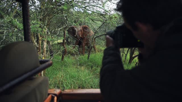 photographer taking pictures of a territorial wild elephant, in the bush, kenya, africa - herbivorous stock videos & royalty-free footage