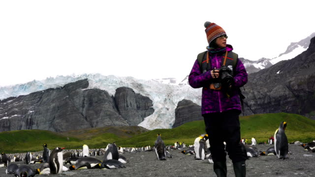 photographer taking pictures of gentoo penguins, saunders, falkland islands - antarctic ocean stock videos and b-roll footage