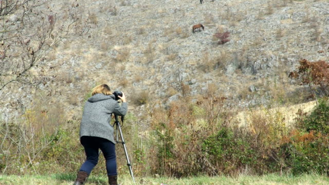photographer taking pictures of wild horses on the cliff - journalist stock videos & royalty-free footage