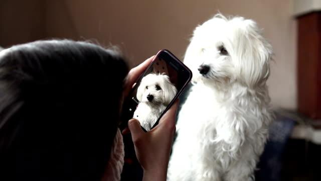 子犬の撮影 - photographing点の映像素材/bロール