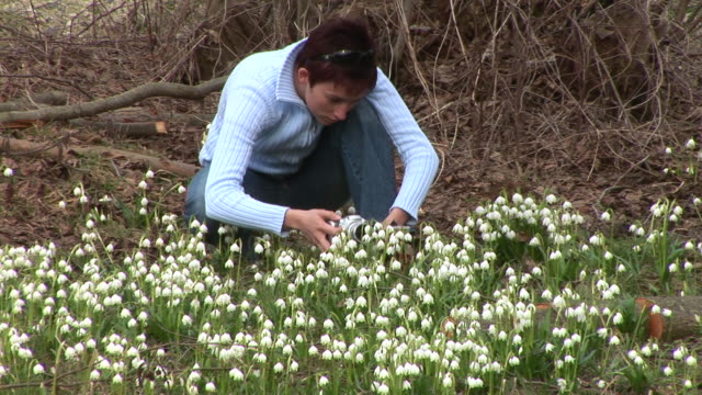 hd: photographing spring flowers - crouching stock videos and b-roll footage