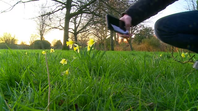 the photographer who captures london's mornings; england: london: ext gv ben james interview as along through park sot close shot daffodil close shot... - tree stock videos & royalty-free footage
