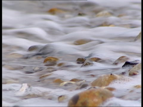 kent shearness ext tschaikovsky's swan lake overlaid over following shots water washing over pebbles on beach seagull flying over beach waves washing... - swan lake stock videos & royalty-free footage