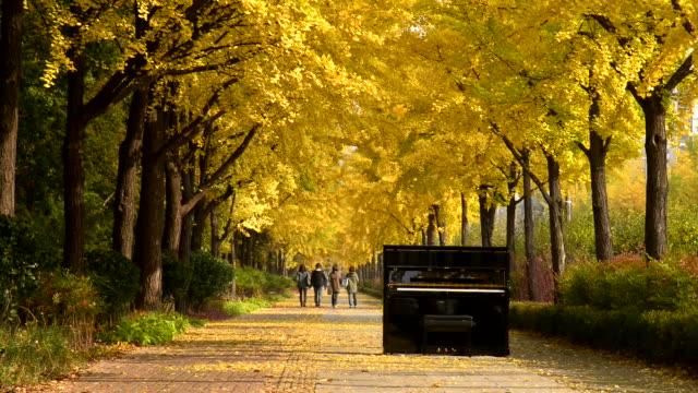 piano on the road of ginkgo tree - höstlöv bildbanksvideor och videomaterial från bakom kulisserna