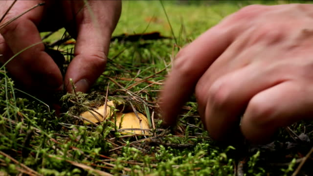 pick up fungus - chanterelle stock videos & royalty-free footage