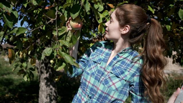 vídeos de stock, filmes e b-roll de colhendo maçãs um por um - pegada