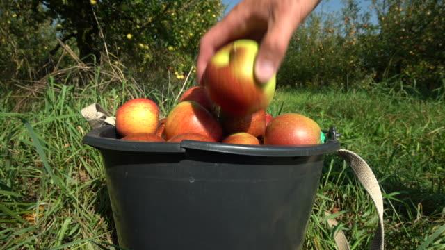 vídeos de stock, filmes e b-roll de colhendo maçãs. maçãs vermelhas em um balde - balde