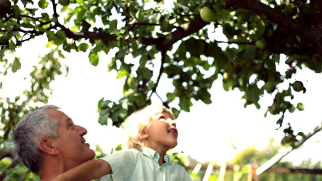 stockvideo's en b-roll-footage met picking apples - reiken