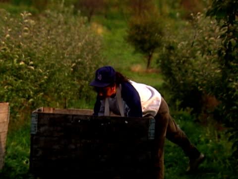 picking apples - einzelne frau über 30 stock-videos und b-roll-filmmaterial