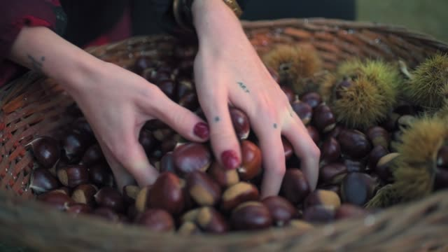 picking chestnuts - nail varnish stock videos and b-roll footage