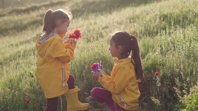 vidéos et rushes de fleur de cueillette - nez