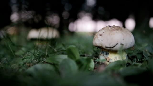 picking mushroom - picking mushrooms stock videos and b-roll footage