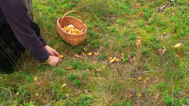 picking mushrooms - picking mushrooms stock videos and b-roll footage