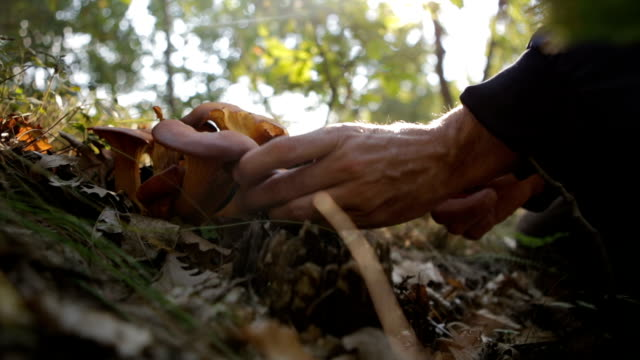 picking mushrooms - mushroom stock videos & royalty-free footage