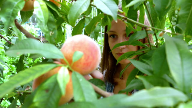 picking peaches -young woman and peaches - peach stock videos & royalty-free footage