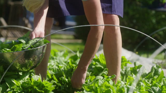 picking spinach - human limb stock videos & royalty-free footage