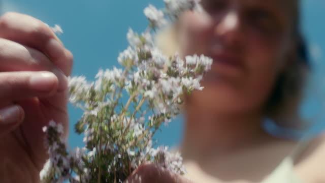 vidéos et rushes de picking thyme - fraîcheur