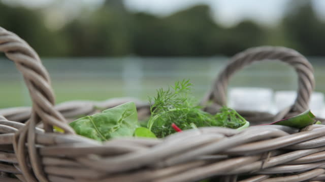 picking up ingredients from a basket - dill stock videos and b-roll footage