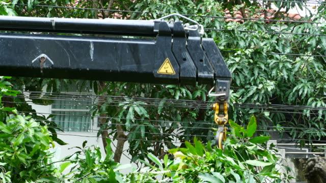 vídeos de stock, filmes e b-roll de pegar algum galho após o corte - ramo parte de uma planta
