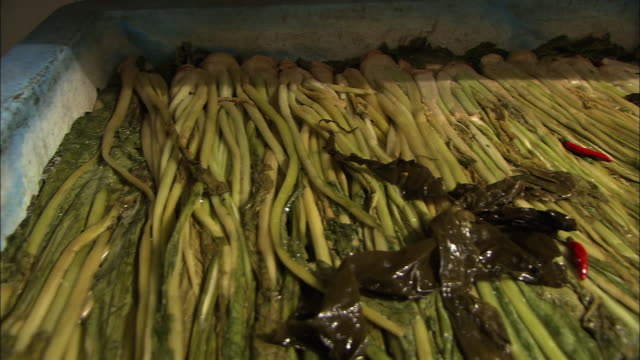 vídeos de stock, filmes e b-roll de pickles called nozawanazuke, nagano, japan - contéiner de plástico