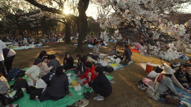 vidéos et rushes de picnic activities with cherry blossoms in yoyogi park - tokyo, japan - parc naturel
