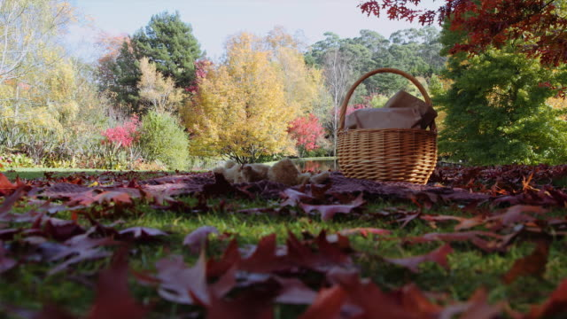 vídeos de stock e filmes b-roll de a picnic basket and a teddy bear in autumn at mount macedon, victoria, australia - picnic