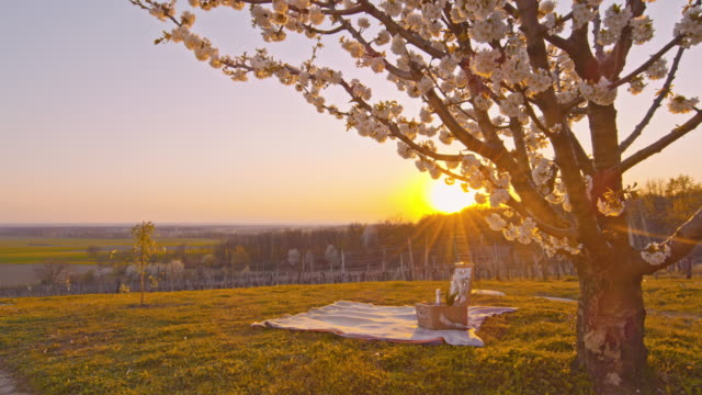 ws picnic blanket and basket below cherry blossom tree on idyllic rural hill at sunset - picnic basket stock videos & royalty-free footage
