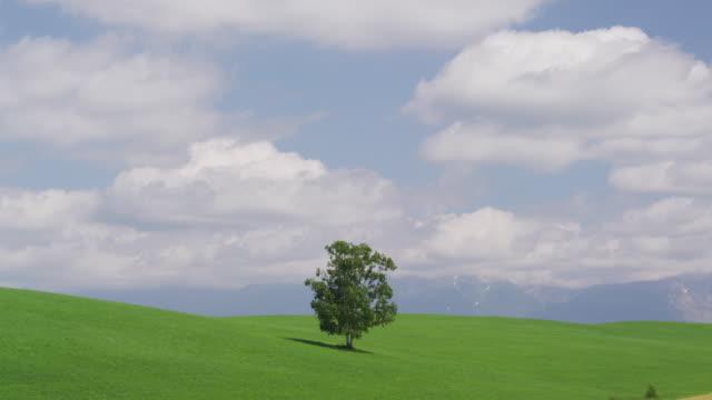 picture book tree in biei, hokkaido, japan - biei town stock videos & royalty-free footage