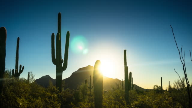 picturesque desert scene at sunrise - time lapse - cactus video stock e b–roll