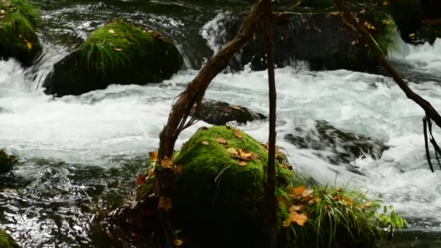 picturesque oirase river and gorge in autumn, aomori prefecture, japan - oirase river stock videos & royalty-free footage
