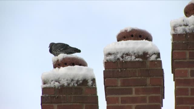 pidgeon in winter - kamin gebäudeteil stock-videos und b-roll-filmmaterial