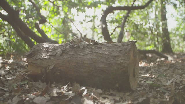 a piece of a trunk of a tree falling in slow motion on a wood covered in dead leaves in various versions - soft focus stock videos & royalty-free footage