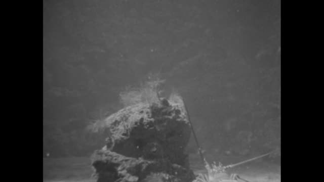 Piece of coral underwater spiny lobster drops down swims slowly around it / octopus swims along coral spiny lobster approaches is repulsed by second...