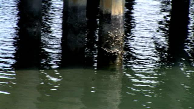 vidéos et rushes de pier pilings - poteau en bois