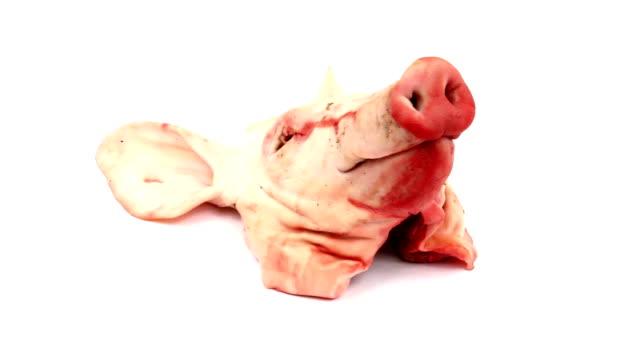 vídeos y material grabado en eventos de stock de cabeza de cerdo - nariz de animal