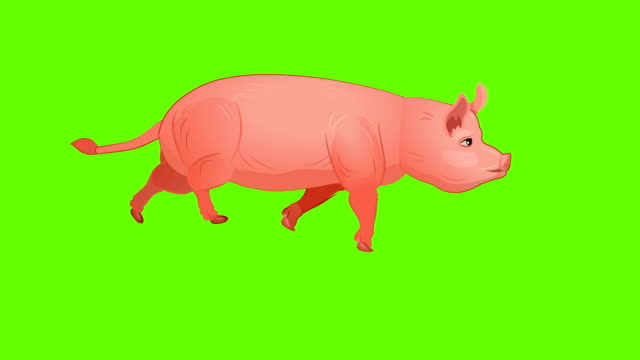pig run cycle animation - livestock stock videos & royalty-free footage