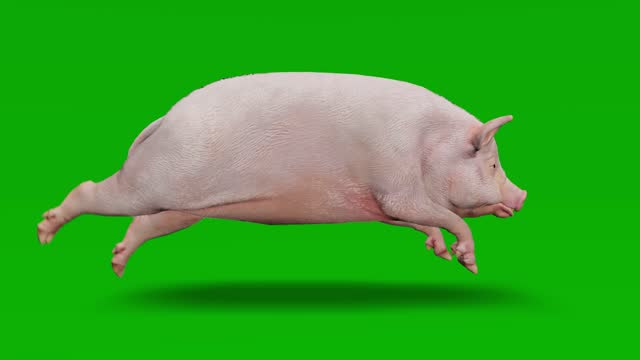 pig running on green screen. the concept of animal, wildlife, games, back to school, 3d animation, short video, film, cartoon, organic, chroma key, character animation, design element, loopable - pig stock videos & royalty-free footage