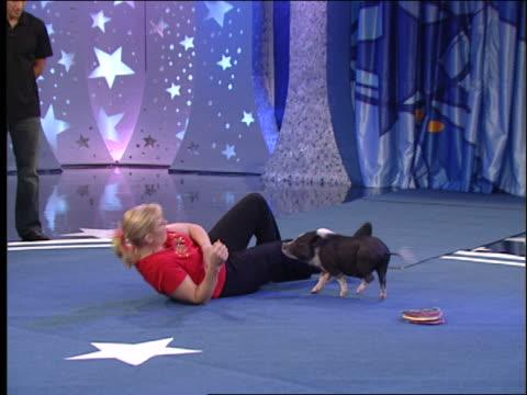 a pig walks between a woman's legs. - performing tricks stock videos & royalty-free footage