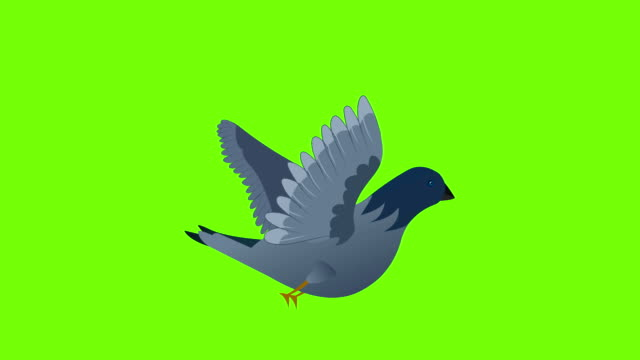 pigeon flying cycle - symbols of peace stock videos & royalty-free footage